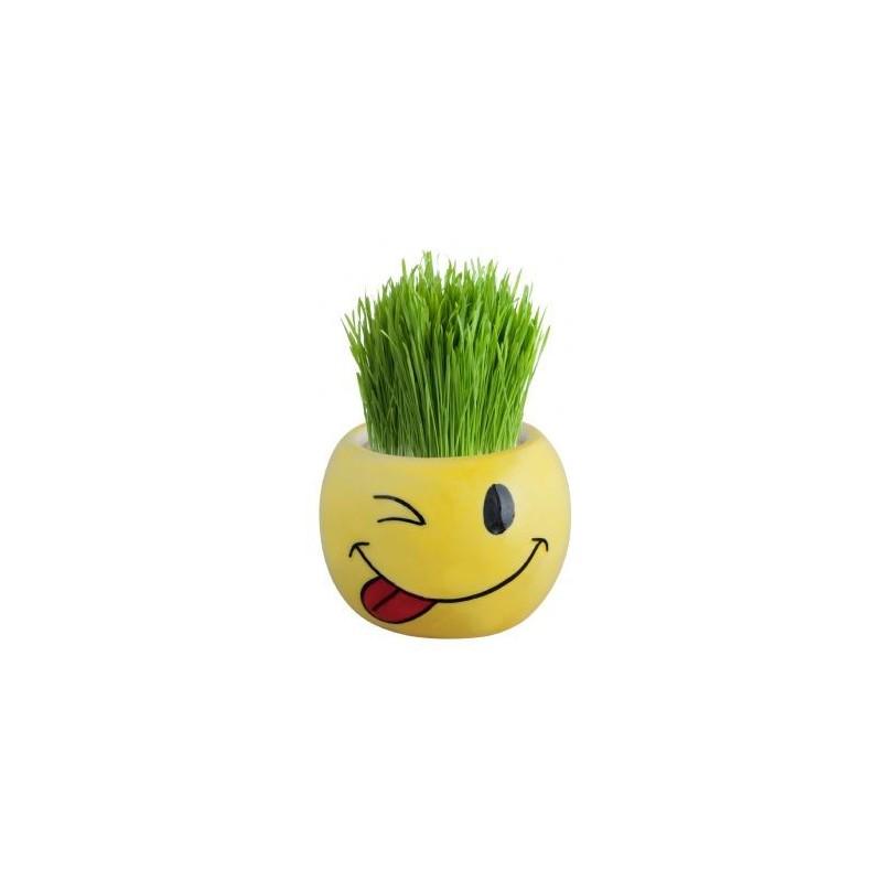 Ghiveci smiley cu seminte de iarba