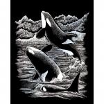 Set gravura pe folie argintie orca