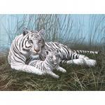 Pictura pe numere juniori   Tigri albi