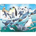 Puzzle Pinguini, 50 Piese Larsen LRFH7