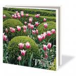 Mapa cu 10 felicitari Tulips Marijke Heuff