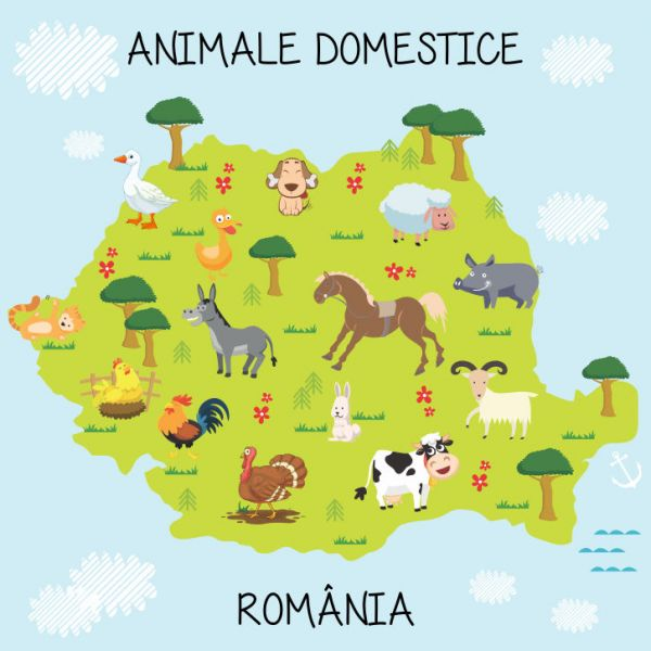 Fototapet Animale Domestice 100 x 100 cm