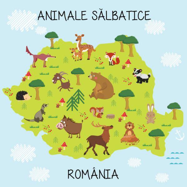 Fototapet Animale Salbatice 100 x 100 cm
