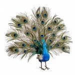 Paun decorativ 56 cm