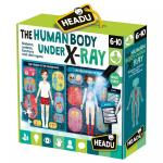 Puzzle Radiografia corpului uman Stem