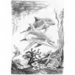 Schita creion incepatori Delfini