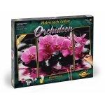 Kit pictura pe numere Schipper Orhidee