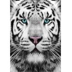 Puzzle Gold puzzle Siberian Tiger 1.000 piese