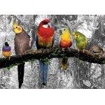 Puzzle de colorat Educa Birds In The Jungle Coloured B&W 500 piese include lipici